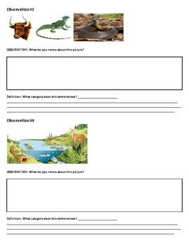 Categorizing An Ecosystem