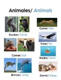 Categorizing and describing nouns