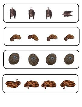 Categorizing by Size: Hibernation Animals