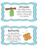 Caterpillar & Butterfly Life Cycle Unit :) :)