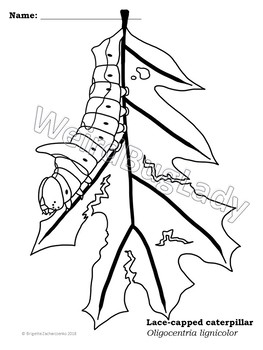 Caterpillar Coloring Pages - Insect art