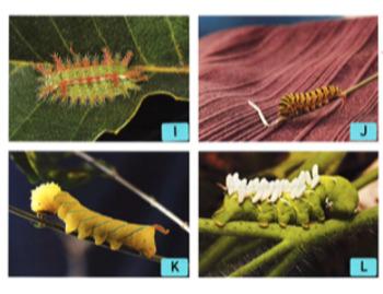 "Caterpillar Measurment ""Read the Room"" Activity"