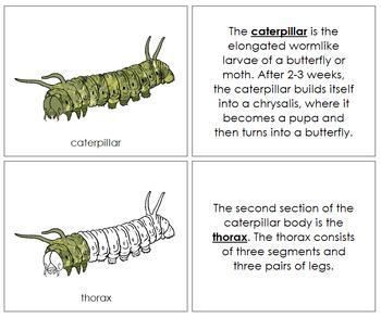 Caterpillar Nomenclature Book