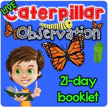Caterpillar Observation Booklet