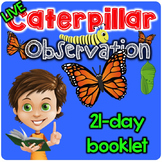 Caterpillar Observation Booklet