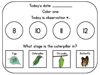 Caterpillar Observation Journal