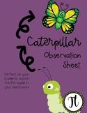 Caterpillar Observation Sheets