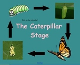 Caterpillar Stage SMARTBoard Lesson {Life Cycle of a Butterfly}