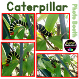 Caterpillar (Sunnah Learners-Photo Booth)