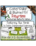 Caterpillar and Butterfly Diagrams: Painted Lady Butterfly