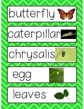 Caterpillar and Butterfly Word Cards
