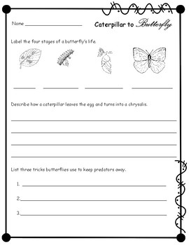 Caterpillar to Butterfly/ Compatible with National Geographic Kids