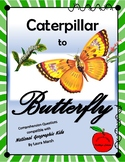 Caterpillar to Butterfly/ Compatible with National Geograp