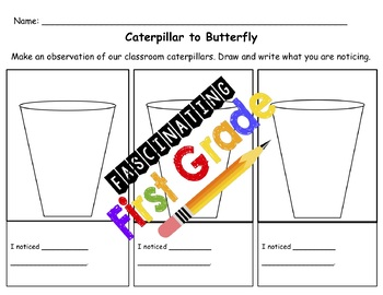 Caterpillar to Butterfly Metamorphosis Observations