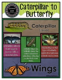 Caterpillar to Butterfly - Word Wall Cards and Fact Cards (pdf)