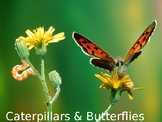 "Caterpillars & Butterflies NF PowerPoint ""Book"" for Late 1st - 4th Gradess"