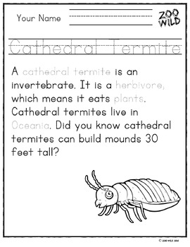 Cathedral Termite -- 10 Resources -- Coloring Pages, Reading & Activities