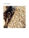 Cato the Dog