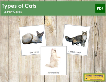 Cats: 3-Part Cards