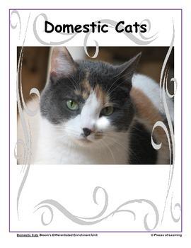 Cats - Differentiated Blooms Enrichment Unit