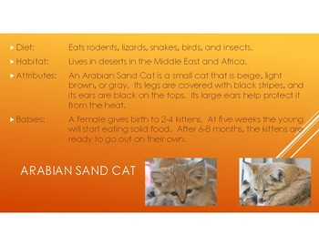 Cats: Facts about diet, habitat, attributes, and babies.