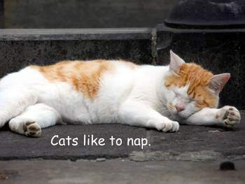 """Cats Nonfiction PowerPoint """"Book"""" for First Grade (easier)"""