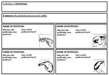 Cattle Dystocia Worksheet