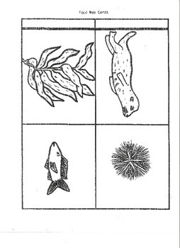 Cause and Effect in the Ocean Food Chains and Food Webs