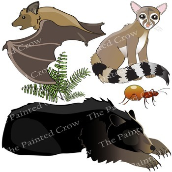 Cave Life Clip Art - Subterranean Creatures - Biology - Science