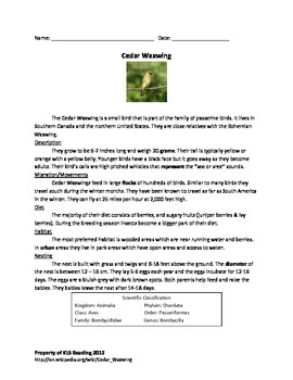 Cedar Waxwing - Bird - Review Article Questions Vocabulary - Information Facts