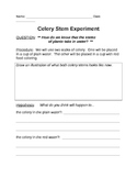 Celery Absorption Experiment