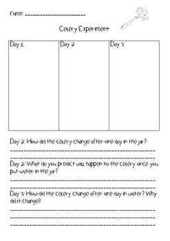photo relating to Celery Experiment Printable Worksheet referred to as Celery Experiment Worksheet Academics Shell out Academics