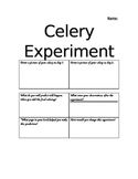 Celery Experiment Graphic Organizer