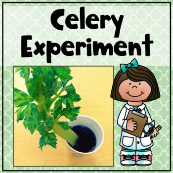 Celery Experiment Recording Sheet