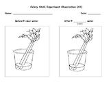 Celery Stalk Experiment Observations Worksheet