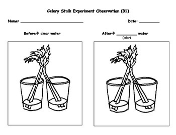Crafty image throughout celery experiment printable worksheet