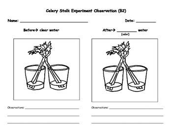 Striking image inside celery experiment printable worksheet