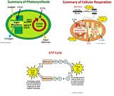 Cell Bioenergetics PowerPoints