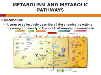 Cell Biology: Enzymes and Cellular Metabolism
