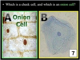 Cell Biology Quiz Game