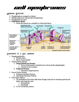 Cell Biology Study Material