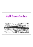 Cell Boundaries Notes: Passive and Active Transport