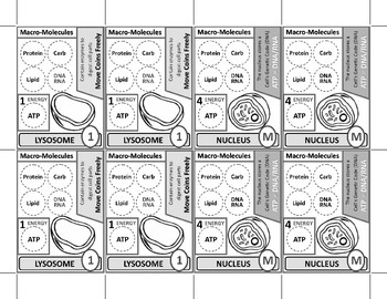 Cell Building Biology Game