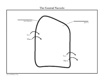 Cell Central Vacuole Diagram Coloring Page and Reading Page