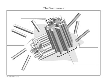 Cell Centrosome and Centriole Diagram Coloring Page and Reading Page