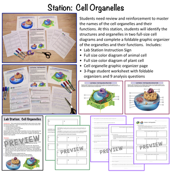 Cell Chat:  Cell Structure and Function Lab Stations