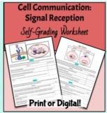 Cell Communication- Signal Reception (AP Bio 4.2) Self-Gra