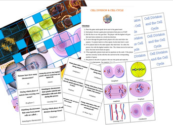Biology: Cell Cycle & Cell Division Board Game