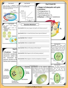Cell Cycle & Cell Division Scavenger Hunt