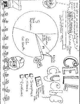 Cell Cycle Coloring Worksheets Teaching Resources Tpt